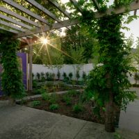 After: view of backyard from under the pergola