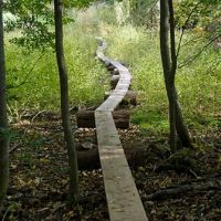Woodland boardwalks allow you to enjoy more of your property