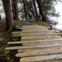 Rustic driftwood paths by the lake
